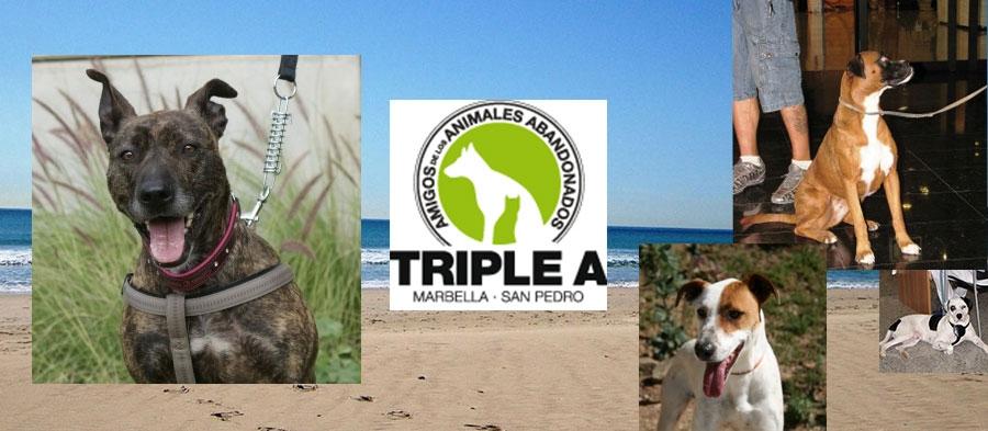 Triple A Marbella Fun Dog Show